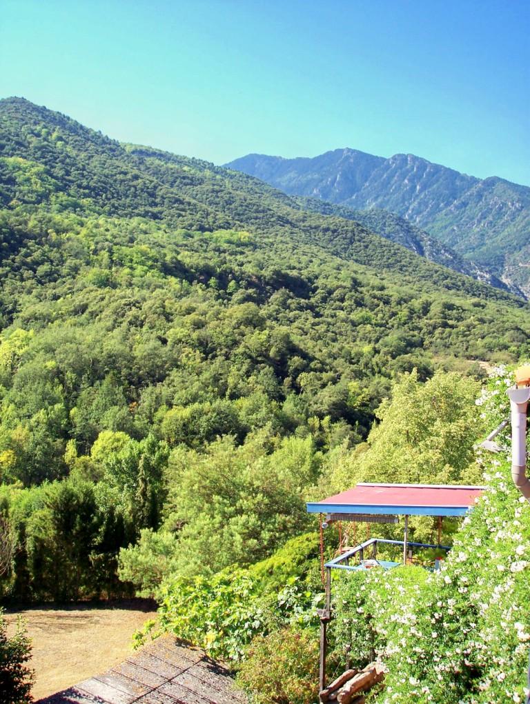 Jasmine Terrace: Witte Lelie